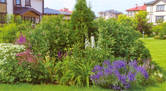 квітник зображення 19
