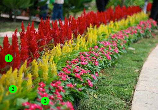 квітник зображення 2