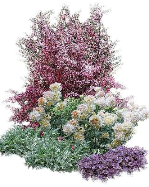 квітник зображення 22