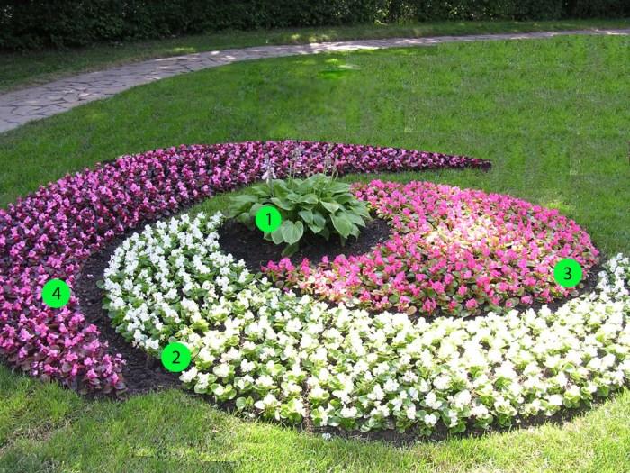 квітник зображення 3
