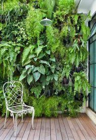 вертикальне озеленення зображення 2