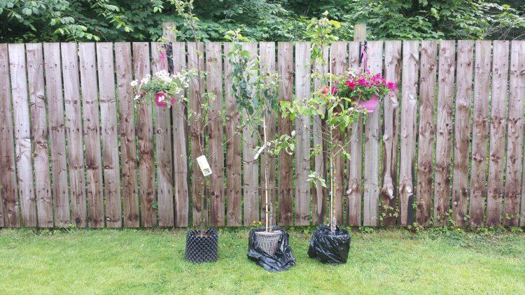 Садимо сад. Як вибрати саджанці плодових?