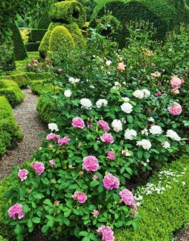 ідеї для саду картинка 25