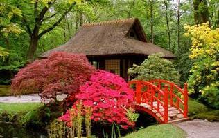 японський ландшафтний сад фото