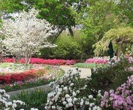 ідеї для саду картинка 40