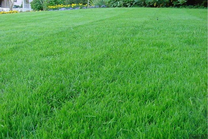 озеленення газон картинка