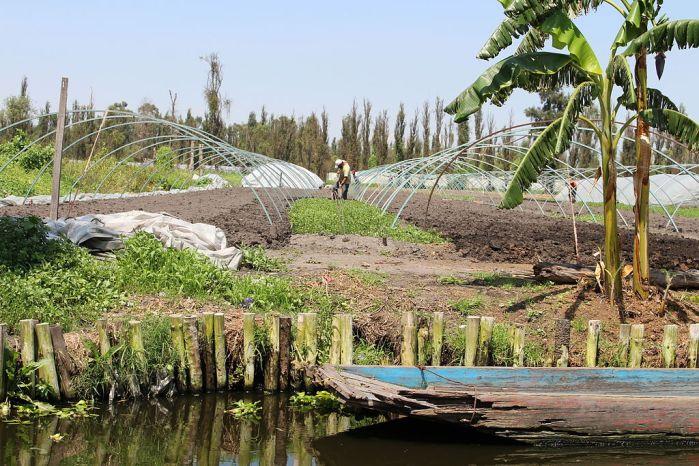 плавучі городи в Мексиці зображення