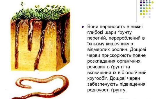 дощові черви зображення