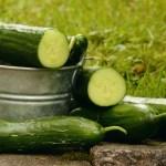 5 органічних підкормок при вирощуванні огірків
