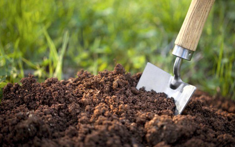 Як розкислити ґрунт? 4 простих способи