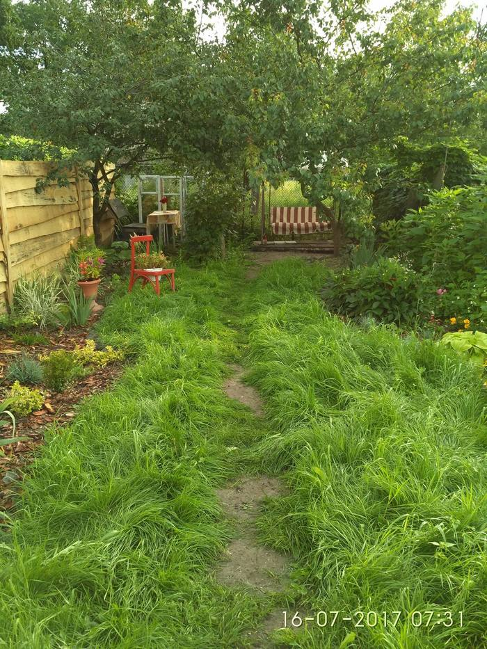 газон без стрижки