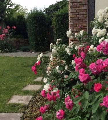 розарій в саду
