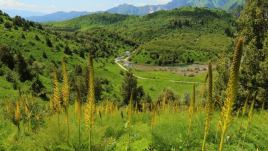 Киргистан, заповідник Сари-Челек фото 2