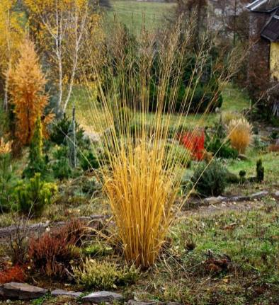 Сад в стилі Пітера Удольфа фото 2