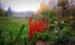 Сад природного стилю фото