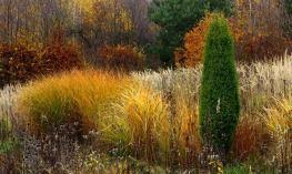 Сад в стилі Пітера Удольфа фото
