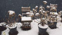 Про зони морозостійкості рослин