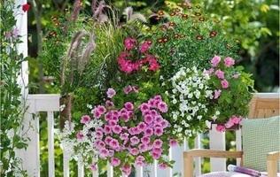 балконні композиції квітів