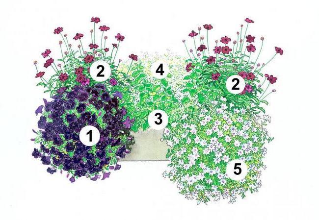 балконні квіти в горщиках фото