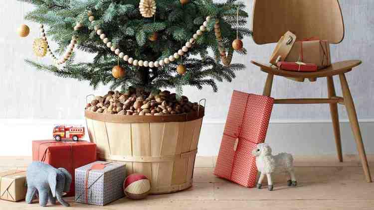 Жива новорічна ялинка в контейнері – чи приживеться в саду?
