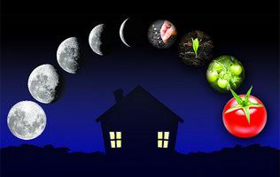 вплив місяця на рослини