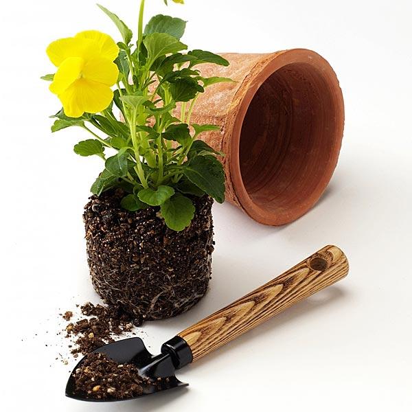 горщик для кімнатних рослин фото