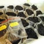 Одноразові мішечки для розсади – як використовувати?