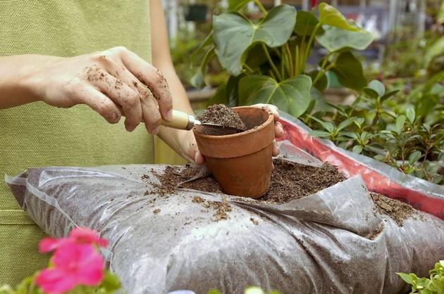 субстрат для кімнатних рослин фото