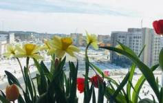 Весна на балконі