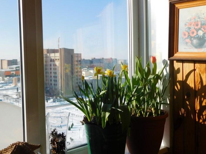 Весна на моєму балконі, 22 березня, 2018 року