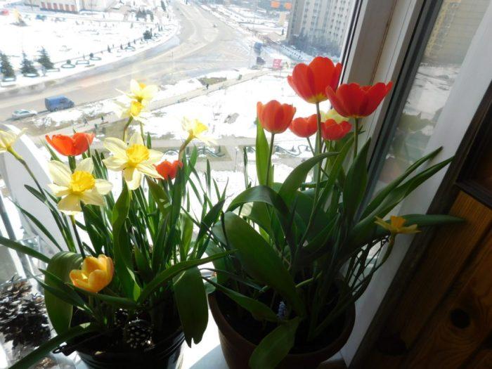 Весна на моєму балконі, 24 березня, 2018 року