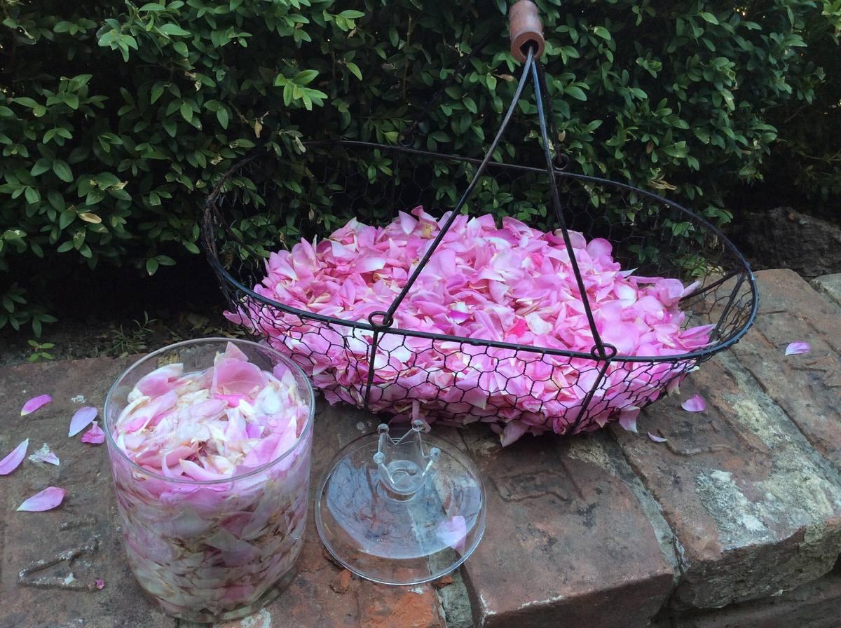 Рецепти з пелюсток троянд — сироп і лосьйон