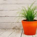 25+ ідей декору горщиків для кімнатних рослин