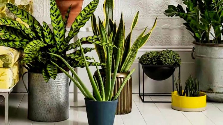 Кімнатні рослини в інтер`єрі: 20+ оригінальних ідей розміщення