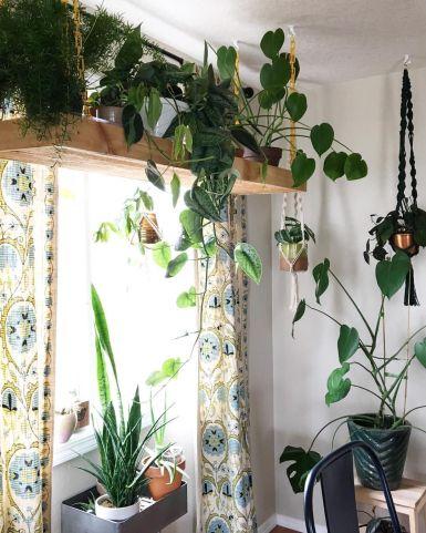 Рослини над підвіконням