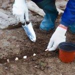 Що посадити під зиму? 20+ культур для підзимних посівів