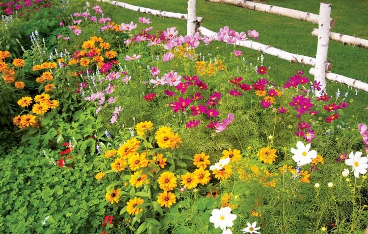 Під зиму можна сіяти і однорічні, і дво- та багаторічні квіти