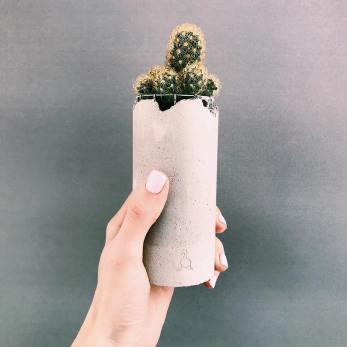 Рослини GOOSUCC