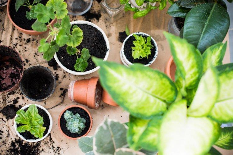 Чого чекають від нас кімнатні рослини навесні?