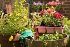 Роботи в саду і на городі в травні