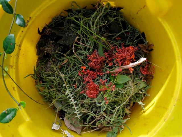 Для швидкого компосту можна використовувати всі відходи городу, саду та оточуючих пустирів