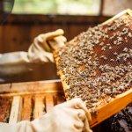 Пасіка для початківців, або Як завести бджіл