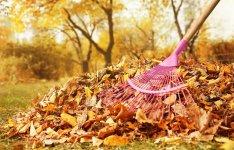 Прибирання опалого листя — за і проти