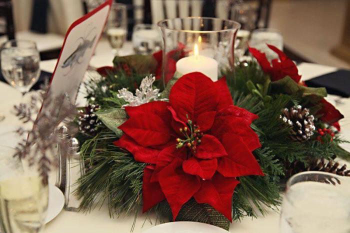 Пуансетія може стати прикрасою святкового столу або грати навіть роль ялинки під час новорічних свят