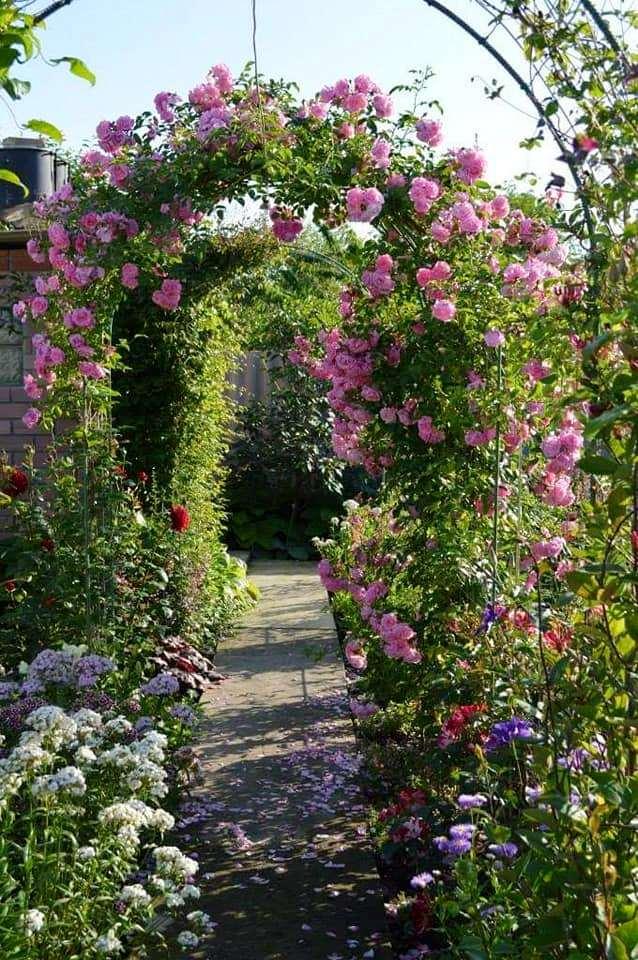 Троянда Dream Weaverб, Zary, США, 1998, (витка флорибунда)