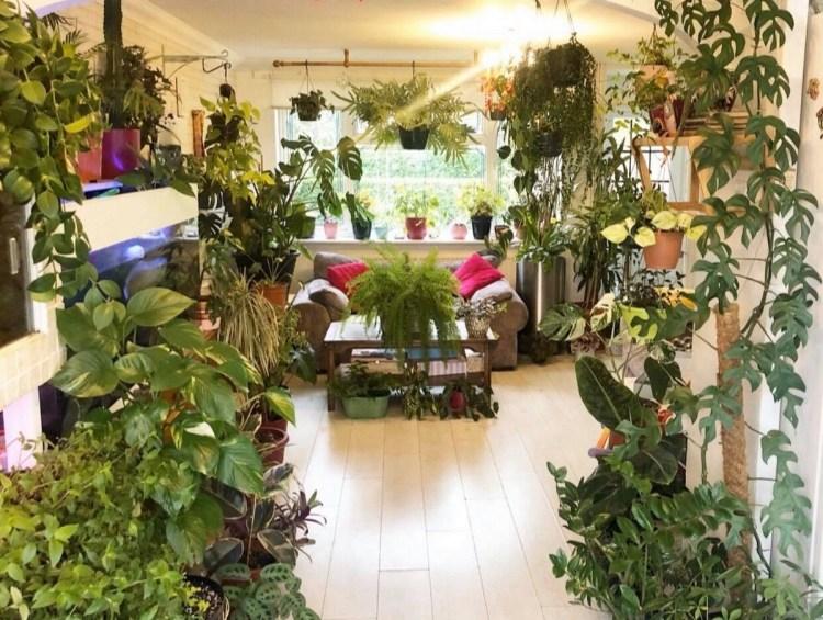 Переможець Indoor Garden (Критий сад) - Корін Токлі-Пакер з Тілбері