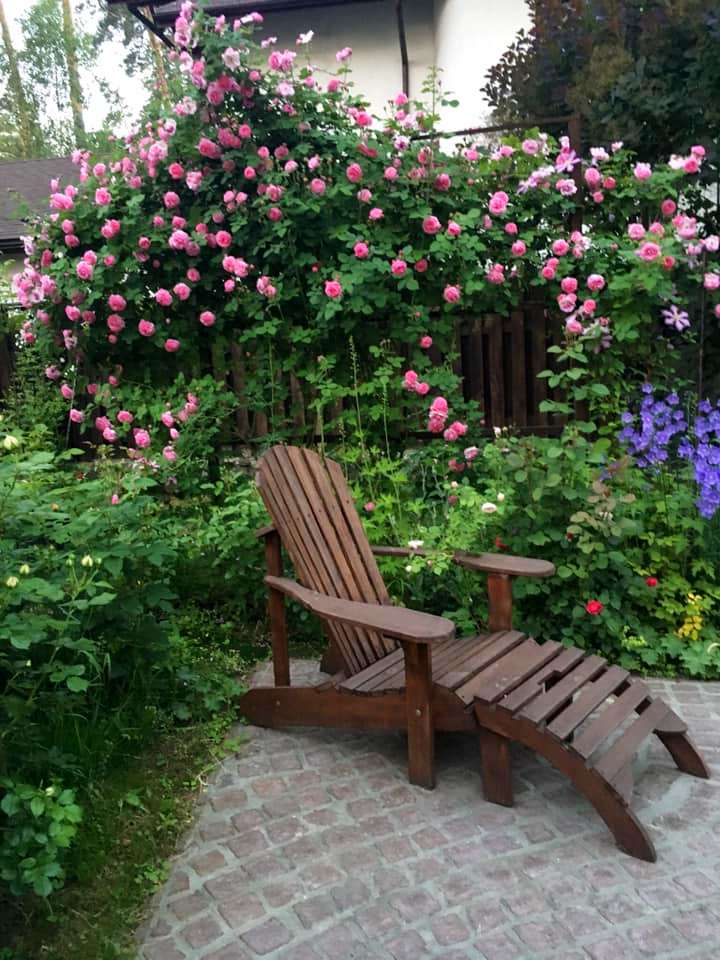 Троянда Louise Odier – габаритна троянда, але її можна примостити на паркан і вона не тільки не займатиме багато місця в саду, вона ще буде родзинкою цього місця!