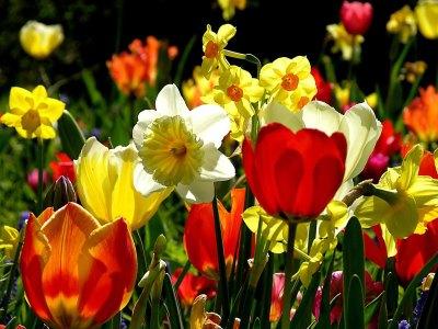 Как защитить цветы от мышей. Как защитить от мышей тюльпаны и лилии — спасаем луковицы от грызунов зимой