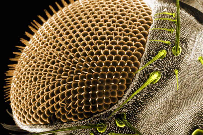 care este viziunea muștelor restaurarea vederii fără ochelari