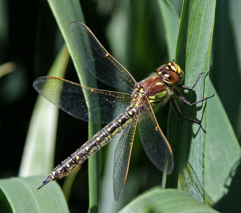 pillangók és szitakötők látása